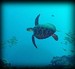Turtle at 100ft by M. Dalsaso 